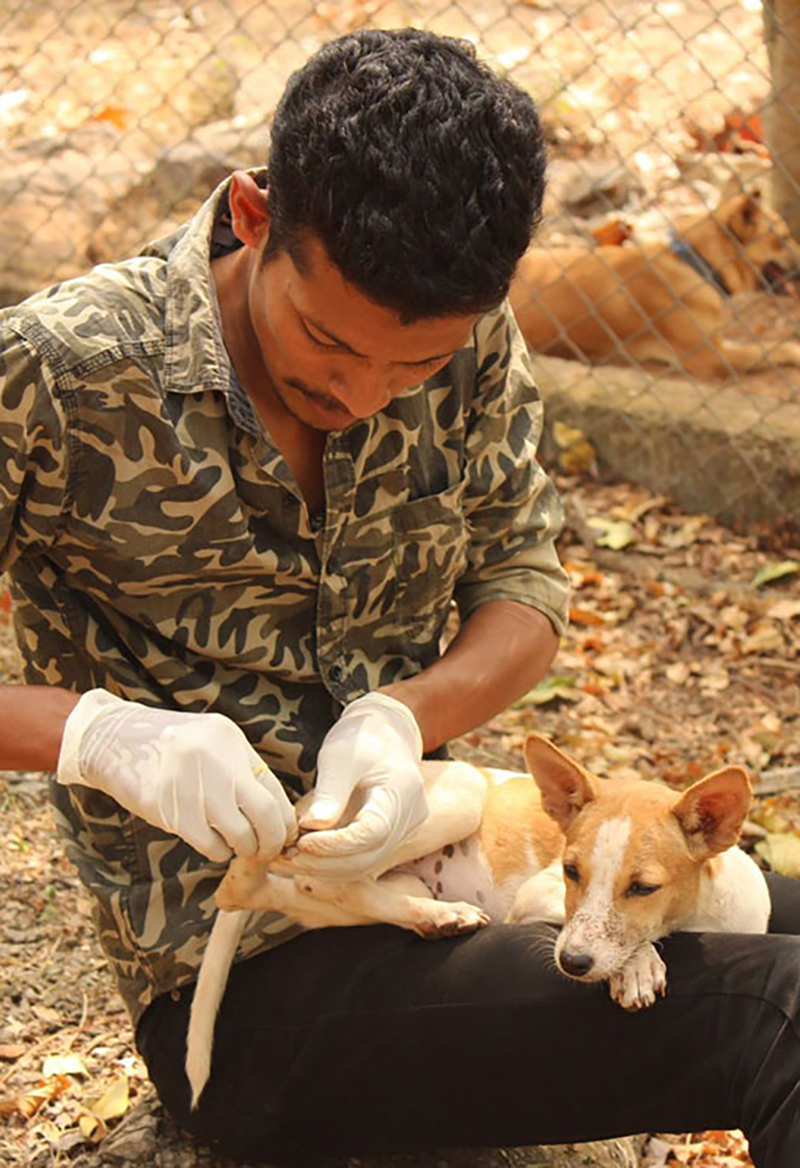 Coimbatore Clinic & Sanctuary - Global Vet Experience