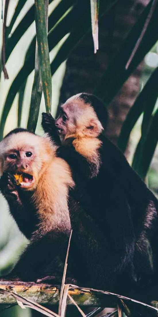 Explore Costa Rica - Global Vet Experience
