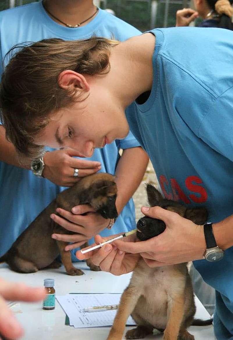 Aklan Rescue & Rehabilitation Center - Global Vet Experience