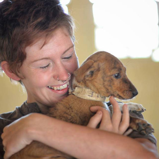 Vet-Experience-in-India-Brown-Puppy---Global-Vet-Experience