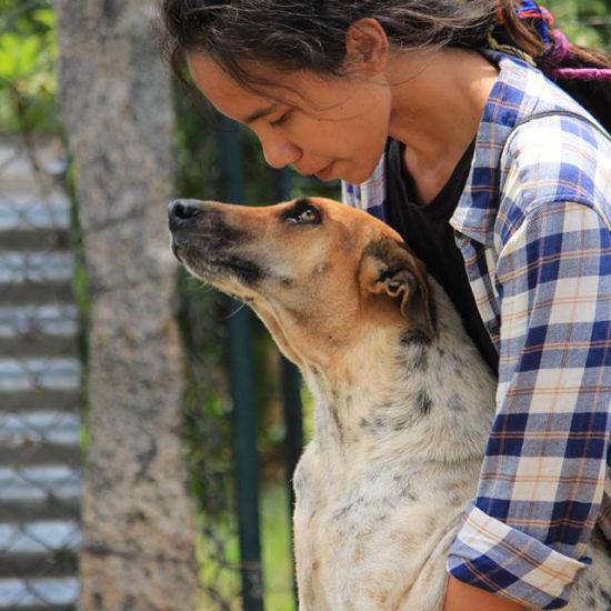 Vet-Experience-in-India-Dog---Global-Vet-Experience