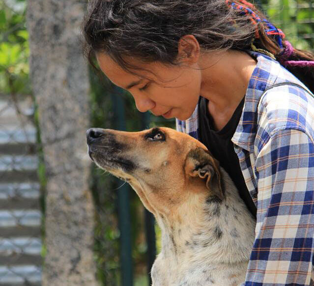 Vet-Experience-in-India-Dog---Global-Vet-Experience