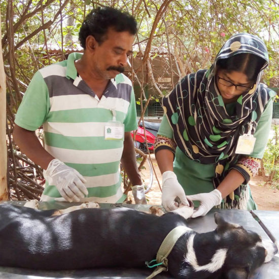 Vet-Experience-in-India-Dog-Surgery---Global-Vet-Experience