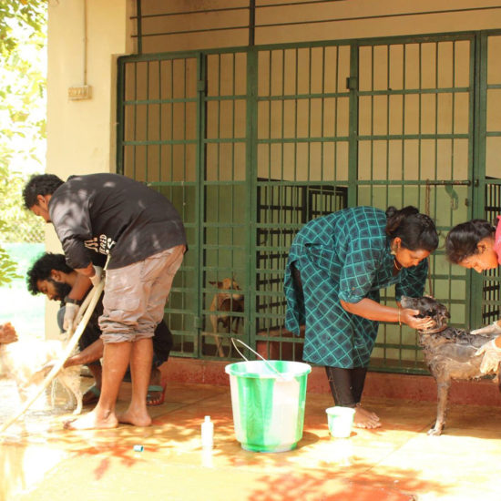 Vet-Experience-in-India-Dog-Wash---Global-Vet-Experience