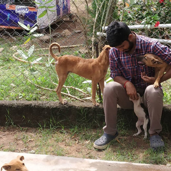 Vet-Experience-in-India-Dogs-and-Puppies---Global-Vet-Experience