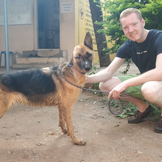 Vet-Experience-in-India-German-Shepard---Global-Vet-Experience