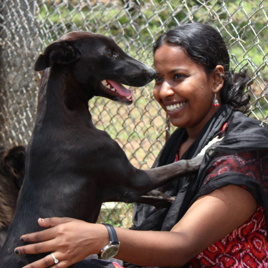 Vet-Experience-in-India-Happy-Dog---Global-Vet-Experience