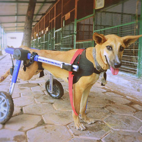 Vet-Experience-in-India-Mobility---Global-Vet-Experience