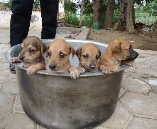Vet-Experience-in-India-Puppies-in-a-Bucket---Global-Vet-Experience