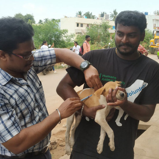 Vet-Experience-in-India-Puppy-Vaccination---Global-Vet-Experience