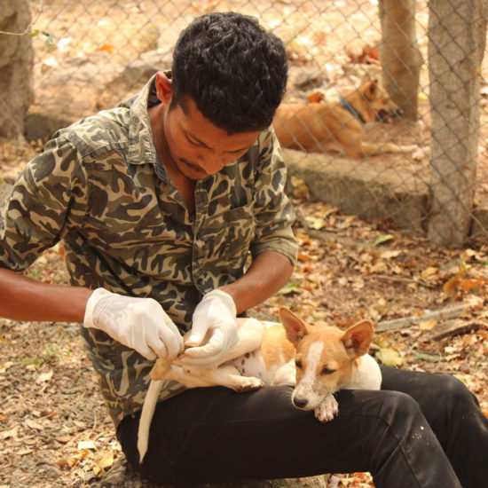 Vet-Experience-in-India-Small-Dog---Global-Vet-Experience