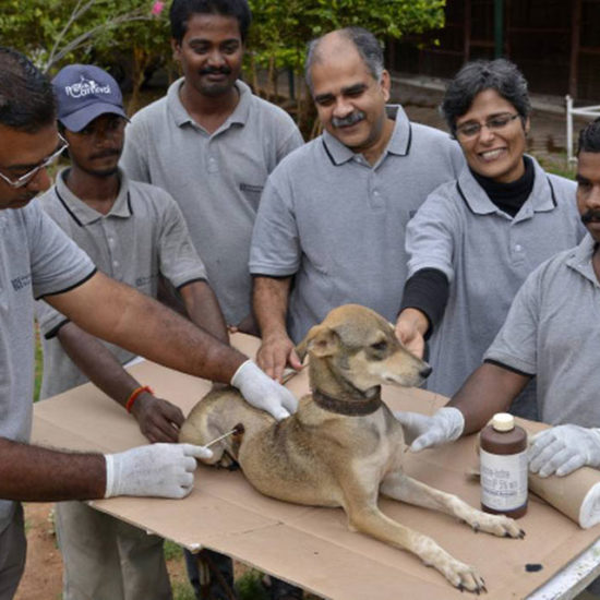 Vet-Experience-in-India-Vet-Team---Global-Vet-Experience
