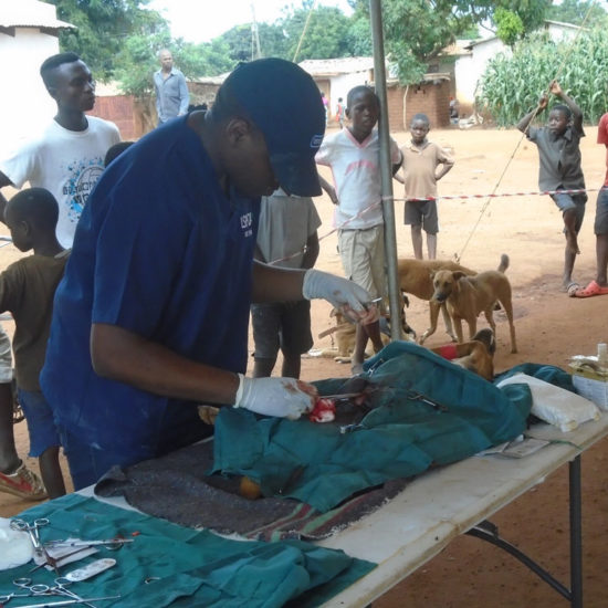 Vet-Experience-in-Malawi-Dog-Spay---Global-Vet-Experience