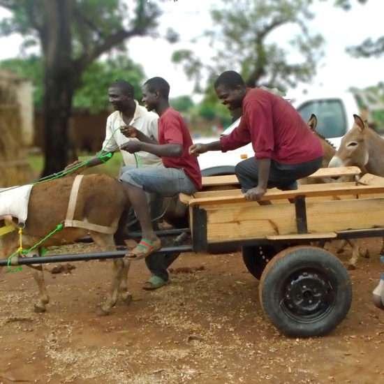 Vet-Experience-in-Malawi---Global-Vet-Experience
