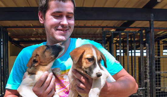 Vet-Experience-in-Malawi-Puppies---Global-Vet-Experience