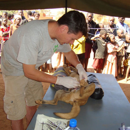Vet-Experience-in-Malawi-Surgery---Global-Vet-Experience