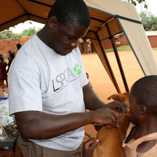 Vet-Experience-in-Malawi-Vaccinations---Global-Vet-Experience