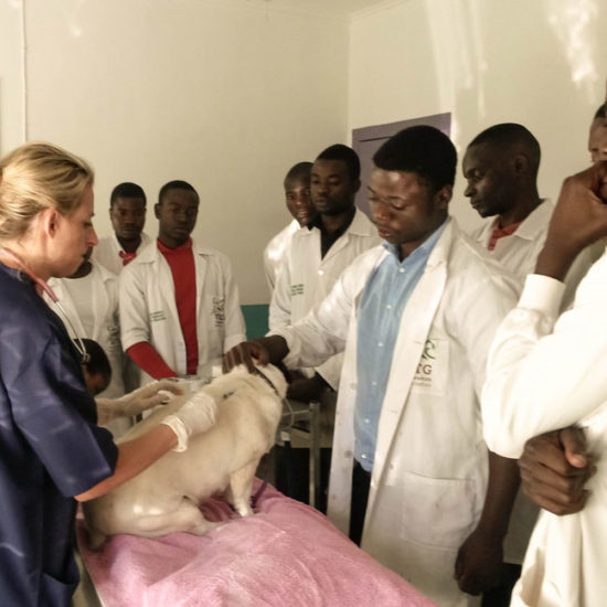Vet-Experience-in-Malawi-Vet-Students---Global-Vet-Experience