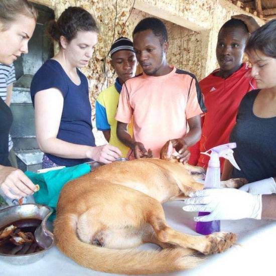 Vet-Experience-in-Tanzania-Canine---Global-Vet-Experience
