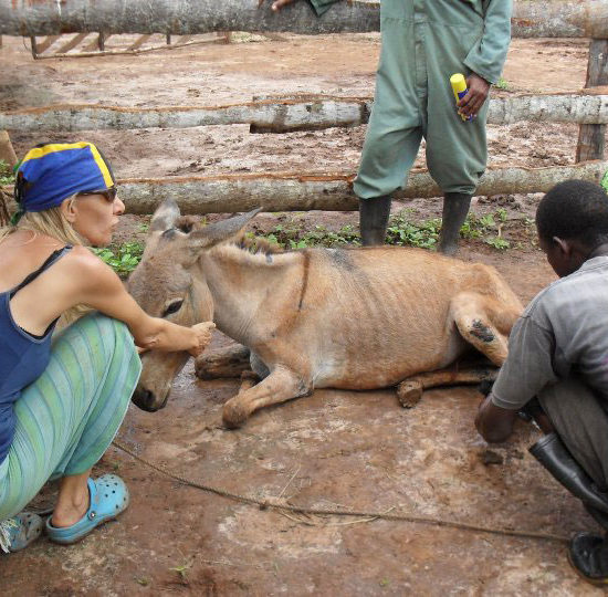 Vet-Experience-in-Tanzania-Donkey---Global-Vet-Experience