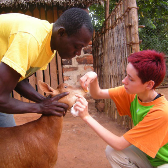 Vet-Experience-in-Tanzania-Goat---Global-Vet-Experience