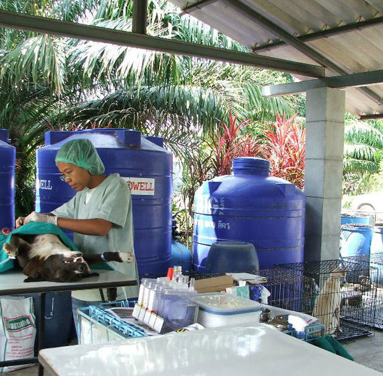 Surgical Vet Experience in Thailand Canine Surgery - Global Vet Experience