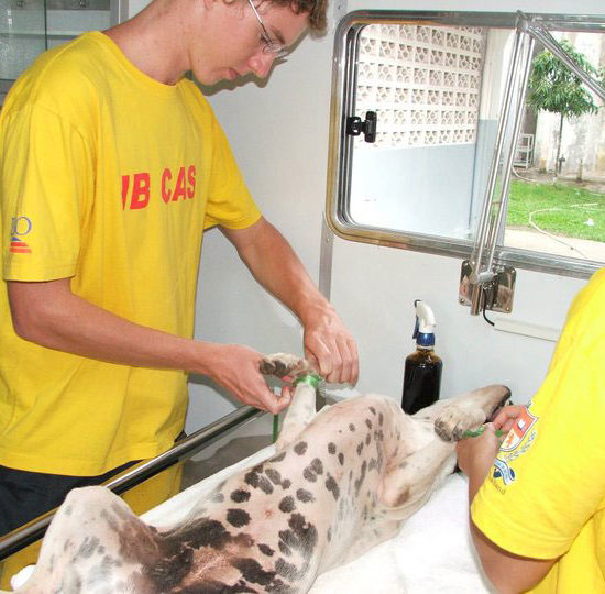 Vet-Experience-in-Thailand-Canine-Surgery-Prep---Global-Vet-Experience