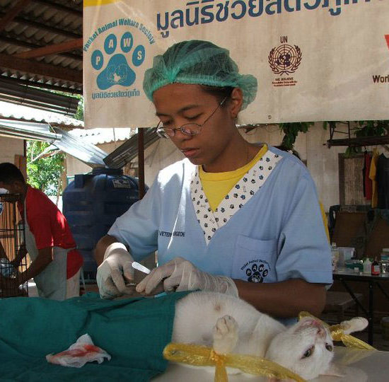 Surgical Vet Experience in Thailand Feline Spay - Global Vet Experience