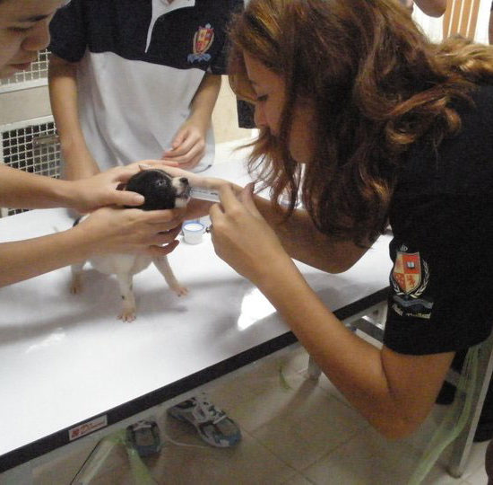 Surgical Vet Experience in Thailand Puppy Assessment - Global Vet Experience