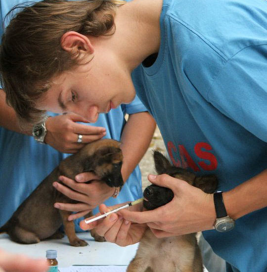 Surgical Vet Experience in Thailand Puppy Assessments - Global Vet Experience