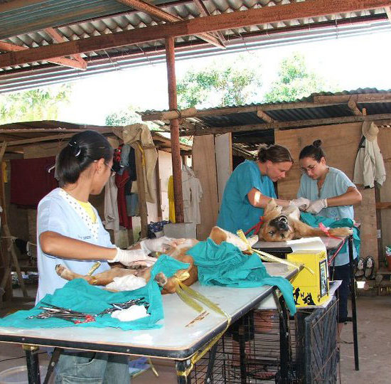 Surgical Vet Experience in Thailand Surgeries - Global Vet Experience