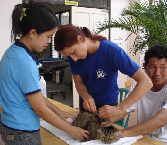 Surgical Vet Experience in Thailand Vaccinations - Global Vet Experience