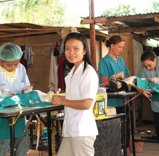 Surgical Vet Experience in Thailand Training - Global Vet Experience