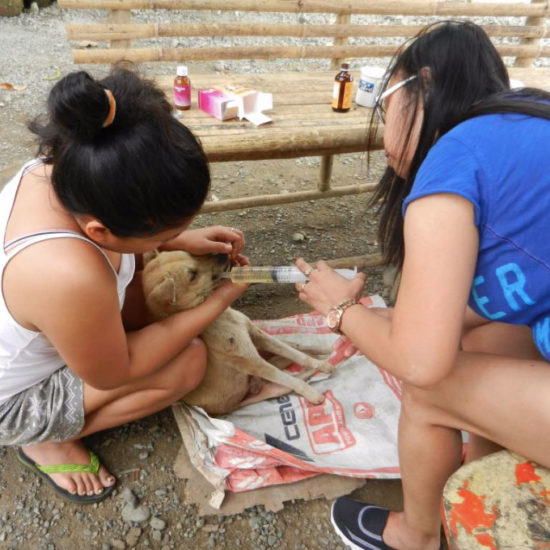 Vet-Experience-in-the-Philippines-Puppy---Global-Vet-Experience