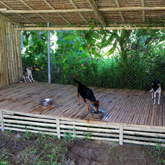 Vet-Experience-in-the-Philippines-Shelter---Global-Vet-Experience