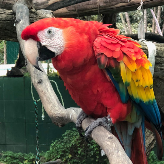 Wildlife Vet Experience in Costa Rica Macaw - Global Vet Experience