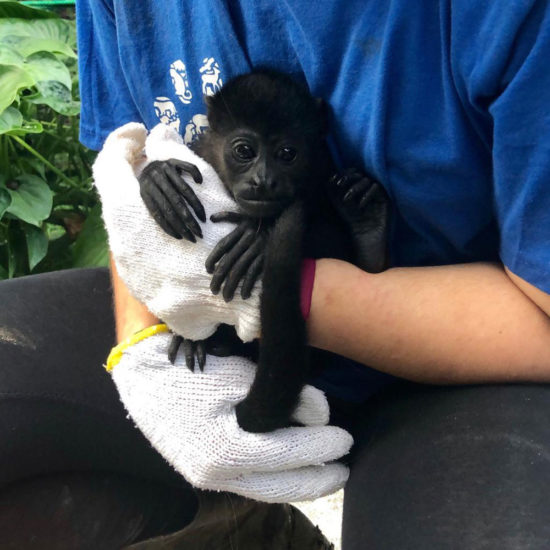 Wildlife Vet Experience in Costa Rica Monkey - Global Vet Experience