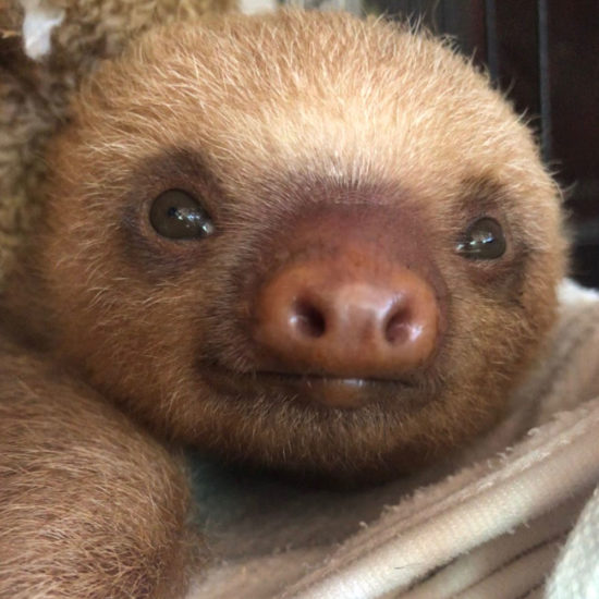 Wildlife Vet Experience in Costa Rica Sloth - Global Vet Experience
