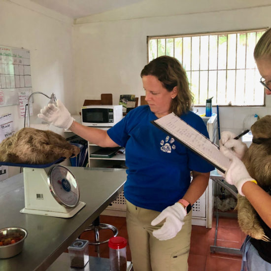 Wildlife Vet Experience in Costa Rica Sloths - Global Vet Experience