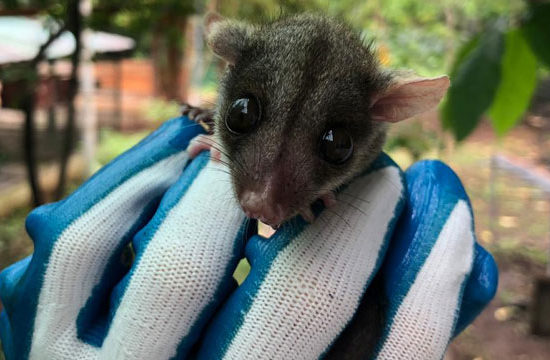 Wildlife Vet Experience in Costa Rica Small Mammal - Global Vet Experience
