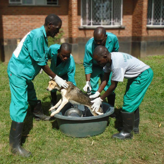 Wildlife-Vet-Experience-in-Malawi-Bath---Global-Vet-Experience