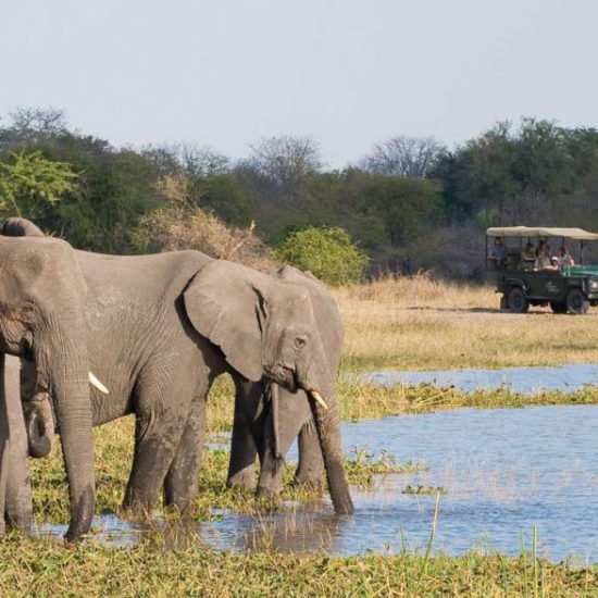 Wildlife-Vet-Experience-in-Malawi-Elephants---Global-Vet-Experience