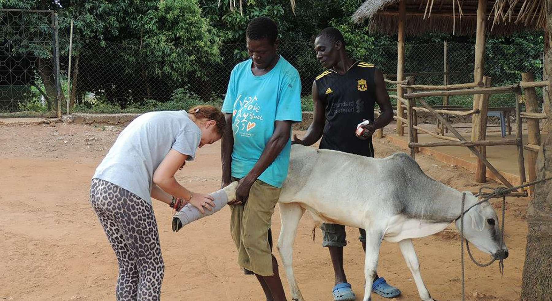 Zanzibar Clinic & Sanctuary - Global Vet Experience