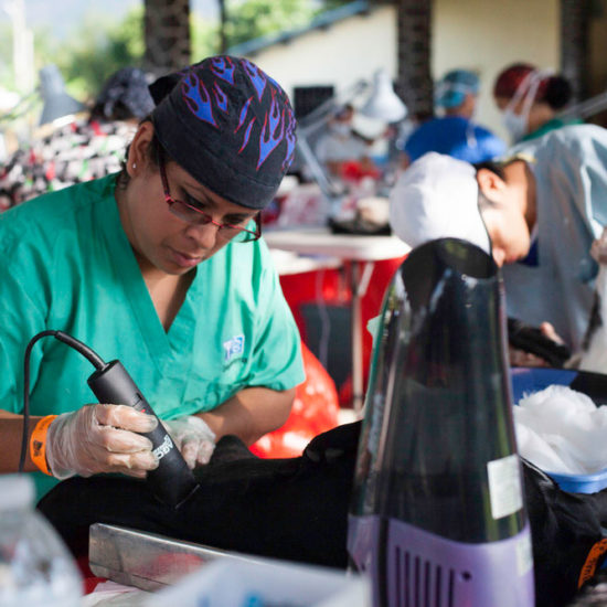 Vet-Experience-in-Panama-Canine-Surgery-Prep---Global-Vet-Experience