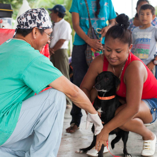 Vet-Experience-in-Panama-Dog---Global-Vet-Experience
