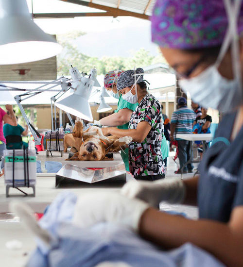Vet-Experience-in-Panama-Dog-Spay---Global-Vet-Experience
