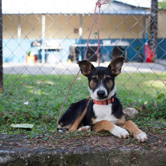 Vet-Experience-in-Panama-Puppy---Global-Vet-Experience