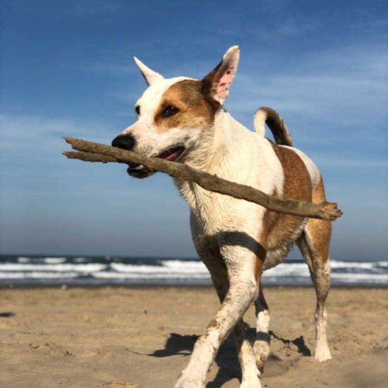 Vet-Experience-in-South-Africa-Dog---Global-Vet-Experience