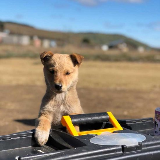 Vet-Experience-in-South-Africa-Puppy---Global-Vet-Experience