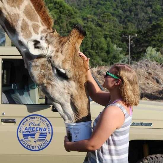 Wildlife-Vet-in-South-Africa---Global-Vet-Experience